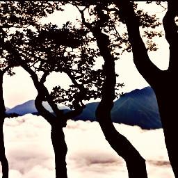 natureart treetrunk cloudsandsky tranquillity enjoy