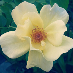 flower nature summer yellow oilpainting