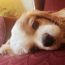 freetoedit edited animals dog oilpainting