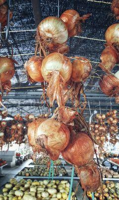 market food fall autumn