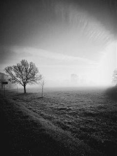 freetoedit tree travel landscape blackandwhite