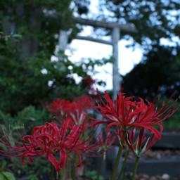 japan flowers
