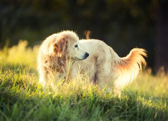 dog portrait petsandanimals nature