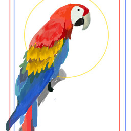 wdpprimarycolors petsandanimals colorful parrot
