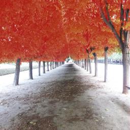 fall leaves france orange