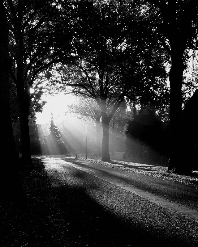 #autumn  #light #blackandwhite #nature