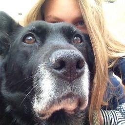 iloveyou dpcdogs