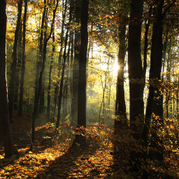 pcforest forest photography autumn colorful dpcleaves