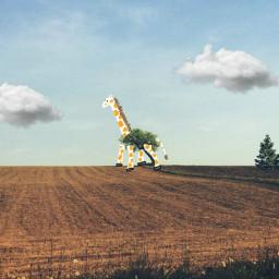 freetoedit drawing giraffe
