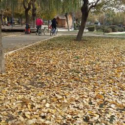 photography autumn iran