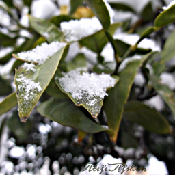 برف babol frozen photobyme photography